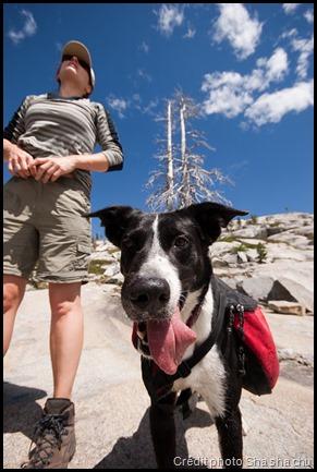 Une randonnée avec son chien, c'est possible