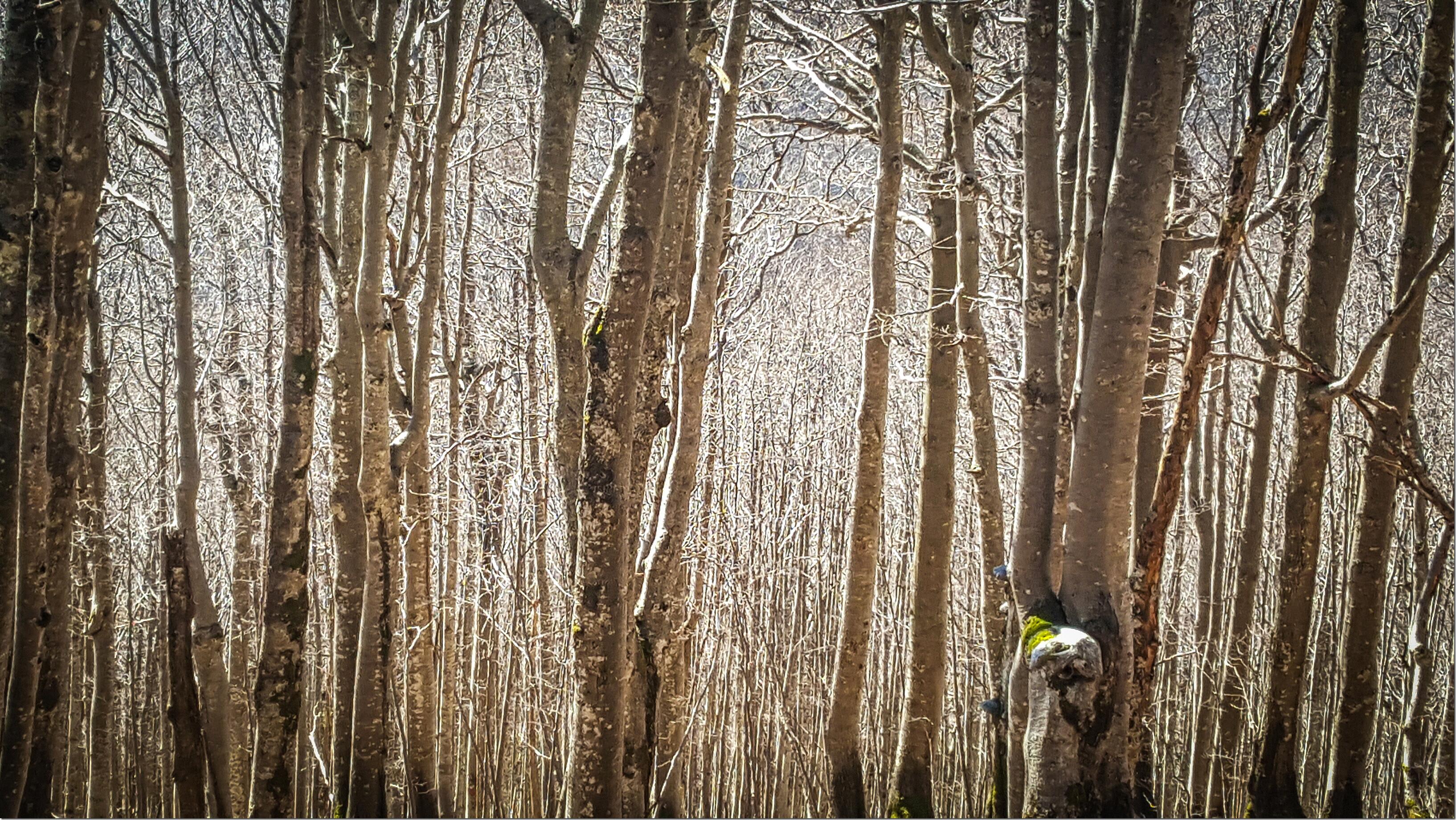 Trek dans les Balkans - l'hiver en Slovénie