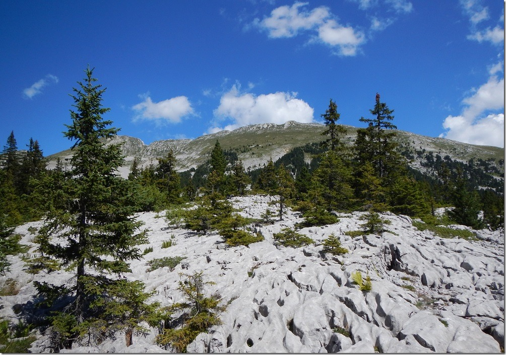 Lapiaz - Hauts-Plateaux du Vercors