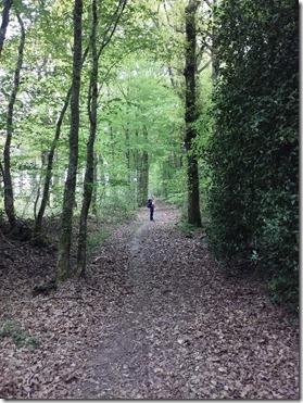 Forêt domaniale de Montrichard