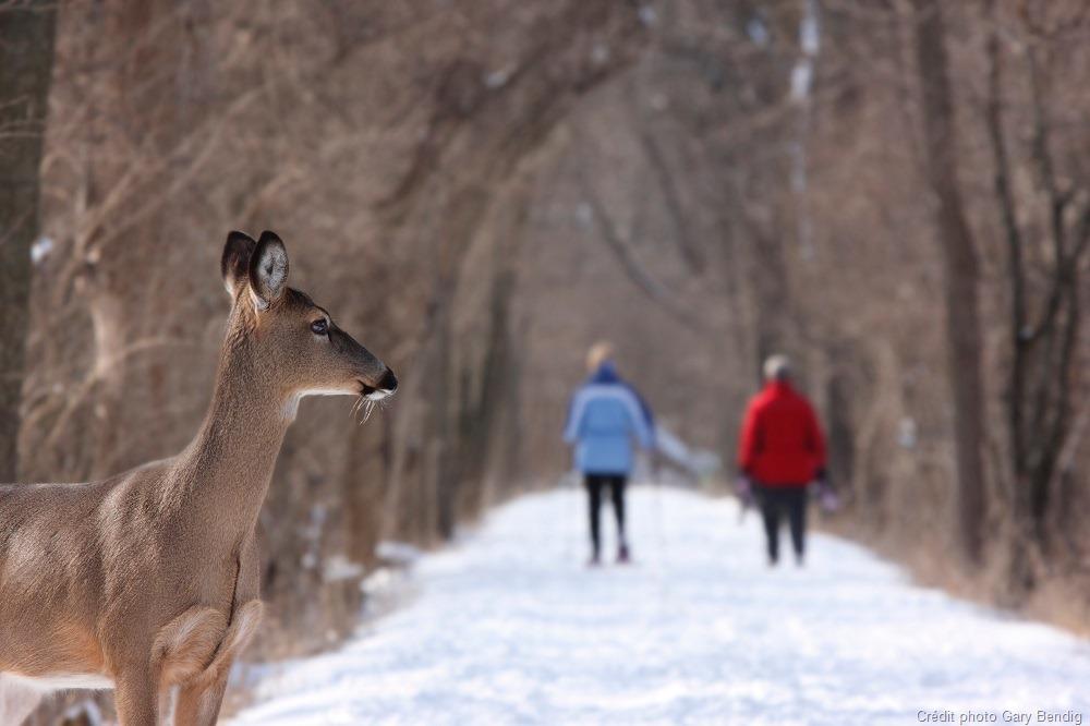 Respectez la faune en randonnée