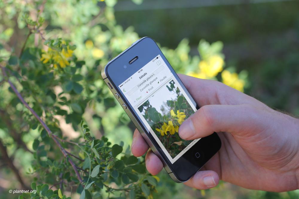 Identifiez les végétaux rencontrés en randonnée grâce à PlantNet